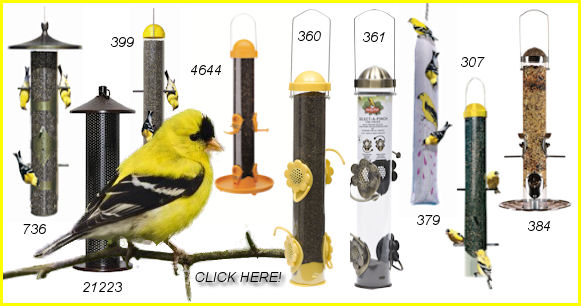 Finch Feeders